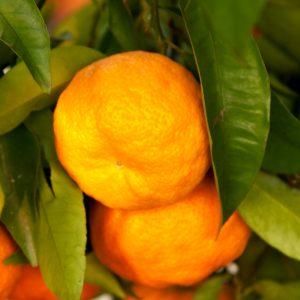 clementina amoa 8
