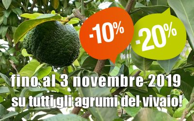 Promozione agrumi autunno