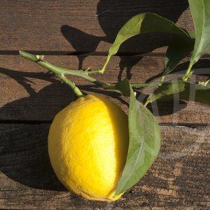 Limone a polpa rossa